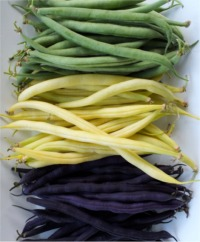 Filet Bush Beans