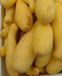 Yellow-Type Summer Squash